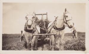 Grandpa's work horses