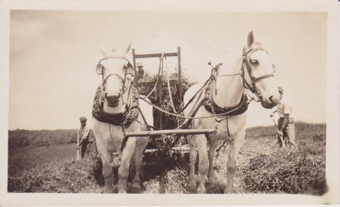 grandpas-work-horses