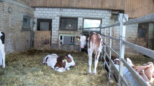 dairy-farm-on-gurten