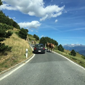 horses-on-road-to-jeneitzen-1