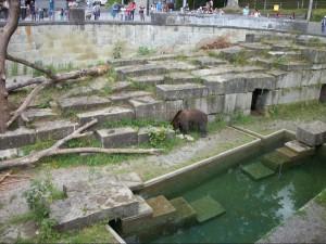zoo-with-bear-8
