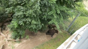 zoo-with-bears-2